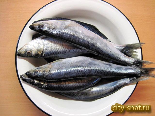 Что приготовить из свежей сельди - Kulina ru